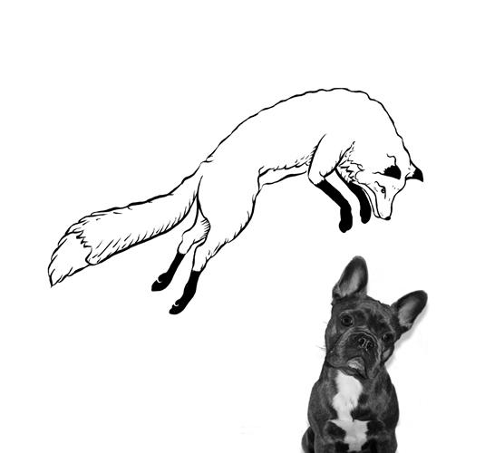 fox 1_500
